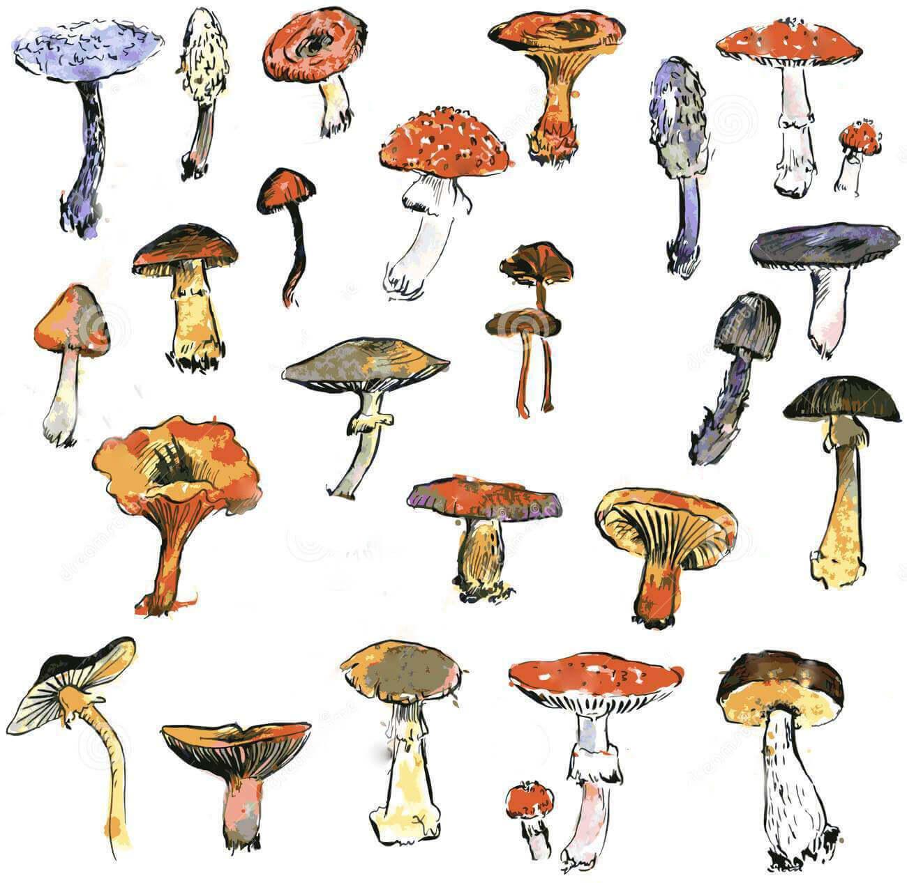Propietà, Caratteristiche e Impieghi dei Funghi